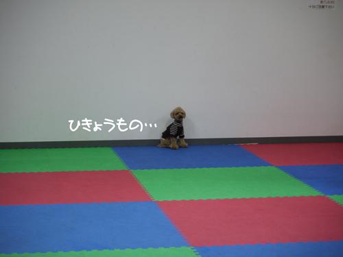 P1080985.jpg